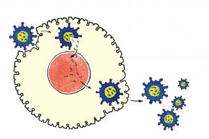 Grippe-Virus: Ausbreitung im Körper