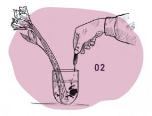 Sellerie in Wasserglas mit Tinte