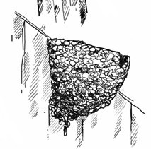 Illustration des Lehmkorbes eines Mehlschwalbe
