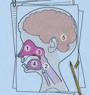 Nasen-Rachen-Raum