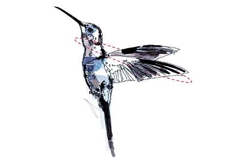 Illustration Kolibri Rückwärtsflug