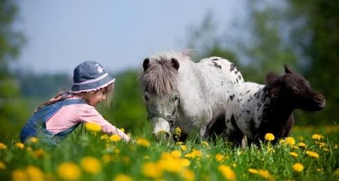 Ein Kind mit einem gescheckten Pony mit Fohlen