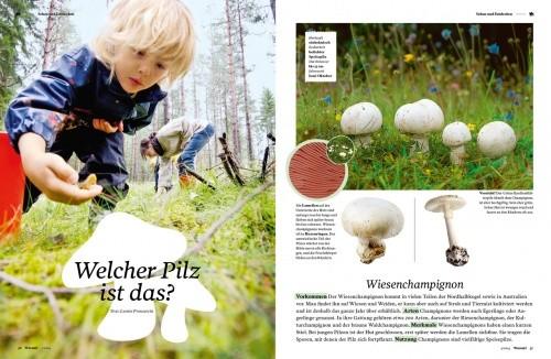 """Warum!-Magazinseite """"Welcher Pilz ist das?"""""""