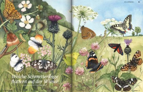Heftseite Schmetterlinge