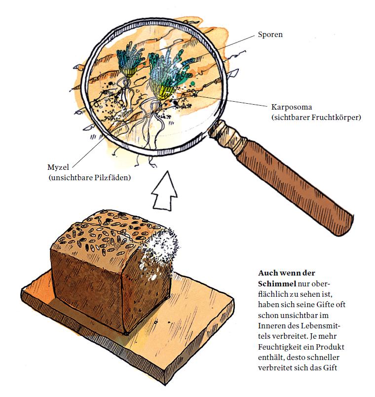 Illustration der Schimmelbildung auf Brot