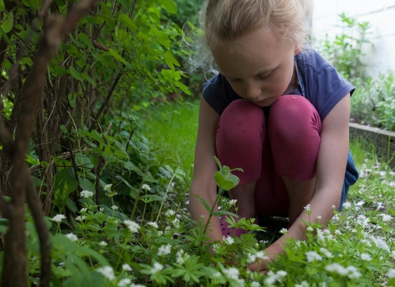 Mädchen pflückt Waldmeister im Garten