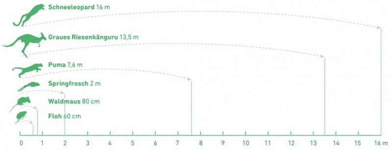 Grafik von Sprungweiten