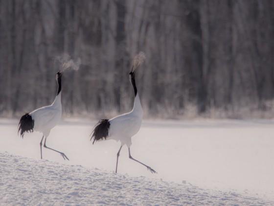 Vögel im Schnee