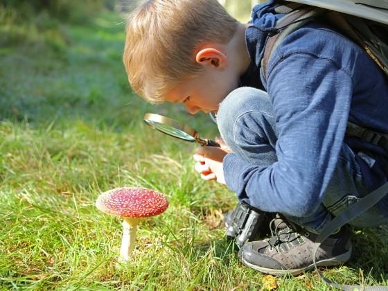 Junge betrachtet Fliegenpilz