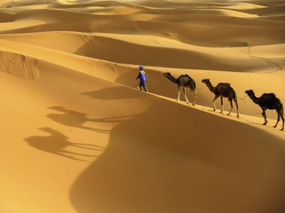 Karawane mit drei Kamelen in der Sahara