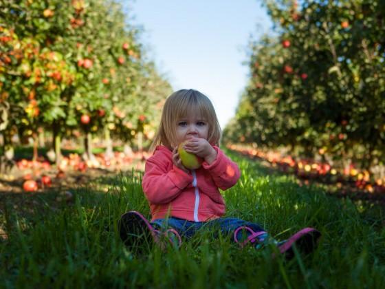 Kind beißt in Apfel