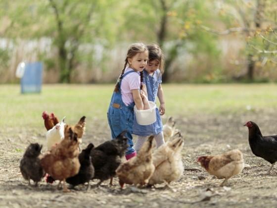 Mädchen füttern draußen Hühner