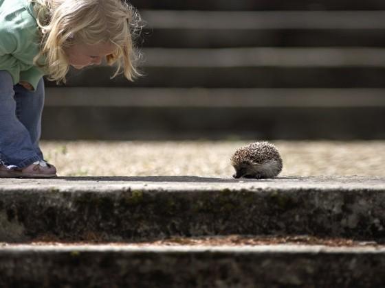 Ein Kind betrachtet einen Igel