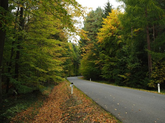 Landstraße zwischen Bäumen
