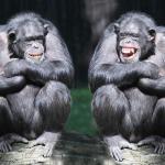 Zwei lachende Schimpansen im Sitzen