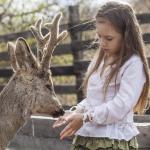 Mädchen streichelt Hirsch