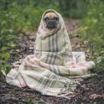 Hund mit Decke auf Waldboden