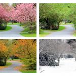 Landschaft in vier Jahreszeiten