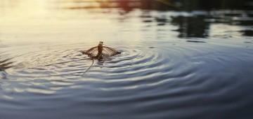 Eintagsfliege auf Fluss im Sonnenuntergang