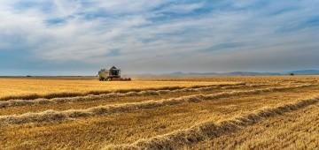 Traktor erntet Getreide