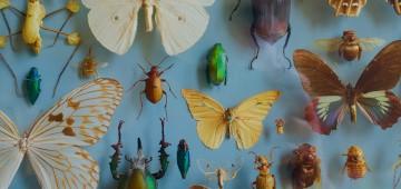 Insekten in einer Ausstellung