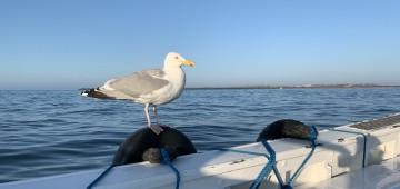 Möwe sitzt auf Bootskante