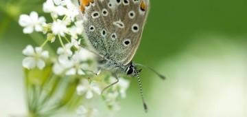 Schmetterling auf einer weißen Blüte