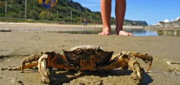 Kind fängt eine Strandkrabbe