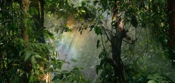 Licht bricht durch die Bäume